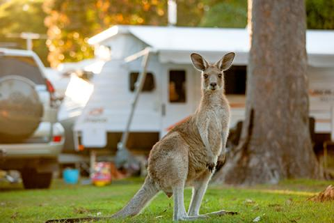 Web Kangaroo and Caravan